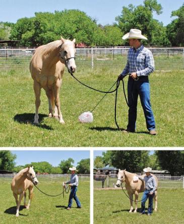 Desensitize your horse